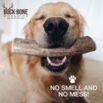 Elk Antler dog bones