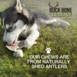 elk antler dog chew made in USA