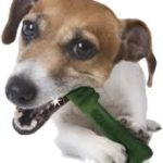 Greenies grain free dog dental chews