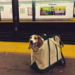 dog news NYC
