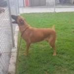 dog news usa