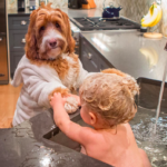 dognewsdogbaby
