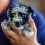 puppy news