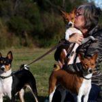 dog news dog show