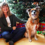 dog news Cinderella Christmas