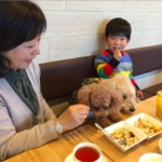 dognewsJapan