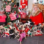 dog news christmas