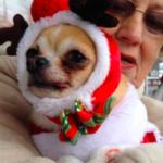 dognewschristmasparade