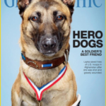 dog news hero