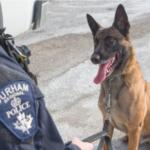 dog news police