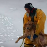 dog news use ice rescue