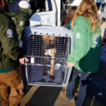 dog news dog meat trade
