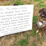dog news siblings