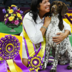 dog news dogshow