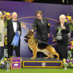 dog news AKC winner