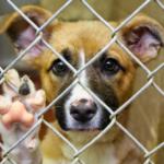 Dog news LA