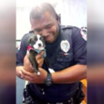 dog news police rescue dog