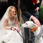 dog news thinnest dog story