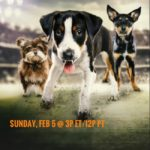 dog news super bowl