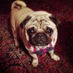 dog news dog dies at grooming store