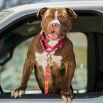 dog news tourist rescue