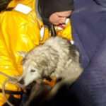 dog news vermont