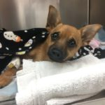 dog news puppy overdosed