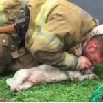 dog news fireman