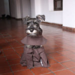 dog news Bolivia