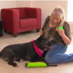 dog news rescue