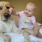 dog news health baby