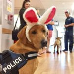 dog news easter bunny