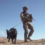 dog news military dog