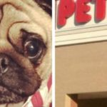 dog news petsco