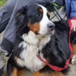 dog news dog adventure