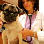 dog news dog flu