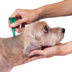 dog news tick and flea prevention