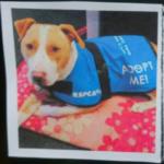 dog news dog adoption