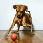 dog news pet tech