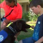 dog news service dog