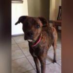 dog news missing dog