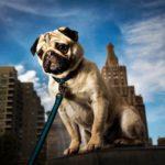 dog news smart dog