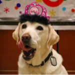 dog news dog birthday
