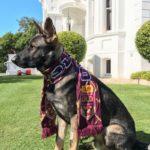 dog news police dog