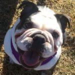 dog news dog ban