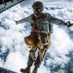 dog news dog parachuting