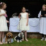 dog news dog wedding