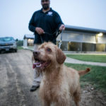 dog news bomb-sniffing dog
