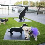 dog news art show