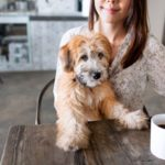 dog news dog cafe shop use